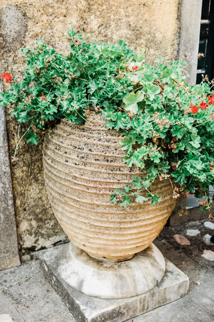 Plant pot full of green leaves and red flowers.